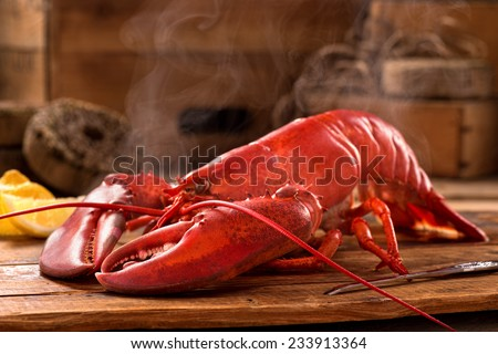 A delicious freshly steamed lobster in the rough. - stock photo