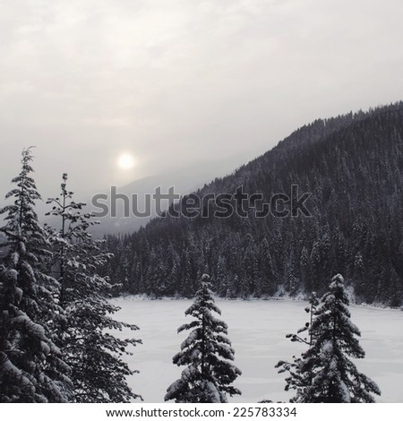 A dense forest surrounded by thick snow on an overcast day. - stock photo