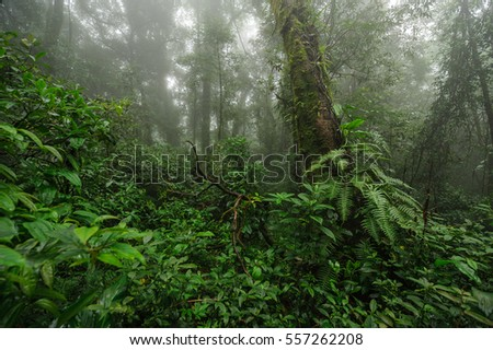 A dense mystic green forest with fog in the morning, Doi Phu Kha, Nan, Thailand