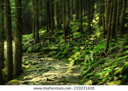 A dense mystic green forest with mossy stones and path - stock photo