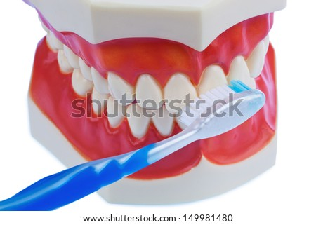a dental model with a toothbrush when brushing teeth. brushing prevents caries. - stock photo