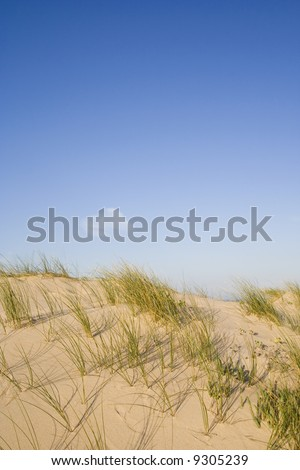 a detail of a dune at the desert - stock photo