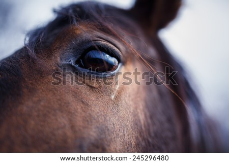 A detail of a horse eye at autumn time