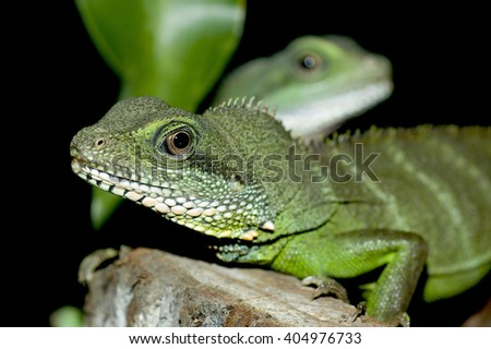 A detailed portrait of green lizard with a second one on a background