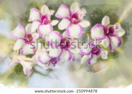 A digital drawing and paint of orchid in southeast Asia.  - stock photo