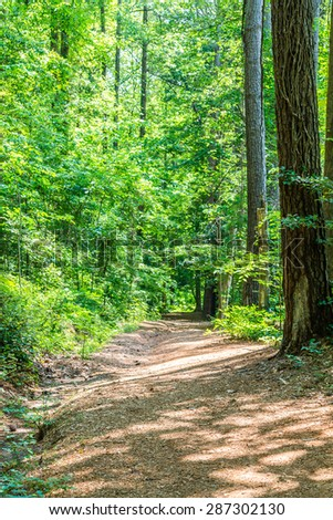 A dirt path through green trees in a forest - stock photo
