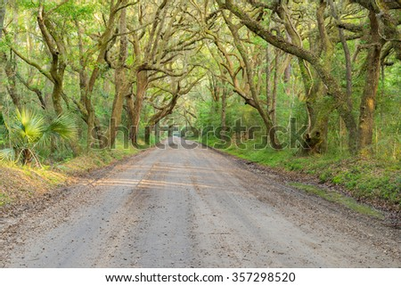 A dirt road on Edisto Island near Charleston, SC, passes through an eerie looking tunnel of Live Oak trees with Spanish Moss hanging down. - stock photo