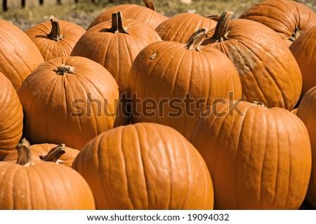 A display of big, bright, orange pumpkins for fall. - stock photo