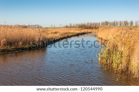 A ditch with a surface that reflects the blue sky and yellow reeds along the waterfront.