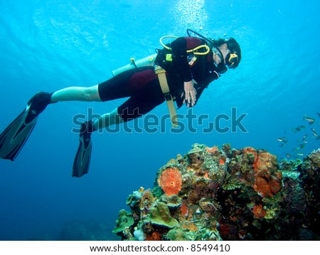 A diver floating over a coral reef in the Caribbean Sea - stock photo