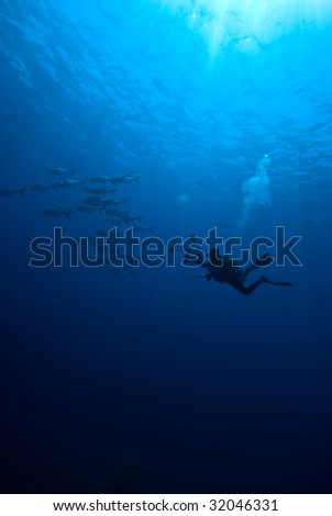 A diver photographing a school of fish - stock photo