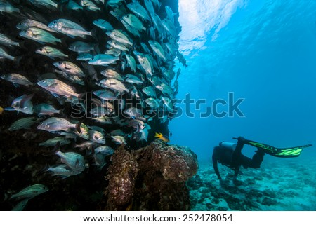 A diver swimming near fish schooling around a wreck  - stock photo