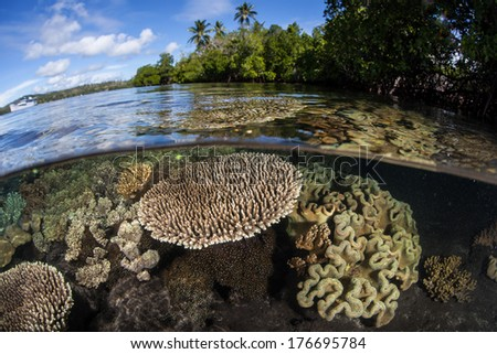 A diverse coral reef grows in extremely shallow water in the Solomon Islands. This country offers incredibly diverse marine habitats, great scuba diving, and fantastic snorkeling. - stock photo