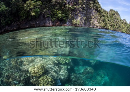 A diverse coral reef grows in the shallows along the edge of limestone islands in Raja Ampat, Indonesia. This area is possibly the epicenter of marine biological diversity and is known for its beauty.