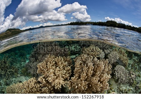 A diverse coral reef grows in the shallows of the Solomon Islands. - stock photo