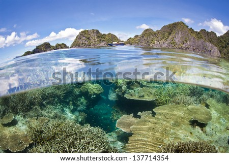 A diverse coral reef grows near a set of limestone islands near the island of Misool in Raja Ampat, Indonesia.  This area is known as the heart of marine biological diversity.