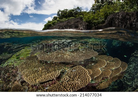 A diverse reef primarily composed of table corals fringes an island in the tropical western Pacific Ocean. This region houses more marine species than anywhere else in the world. - stock photo