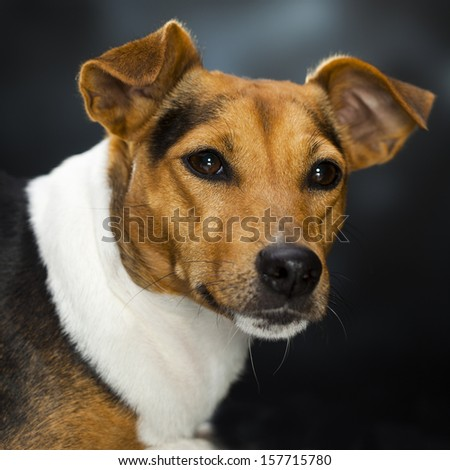 A dog - stock photo