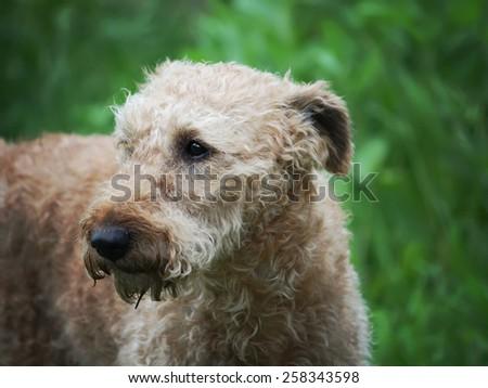 A dog - stock photo