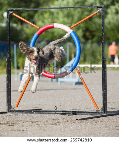 A dog agility in action. - stock photo