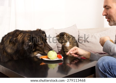 A dog and a cat are curious about a plate full of vegetables - stock photo