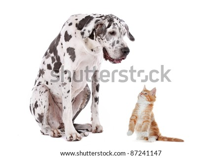 A dog and a cat in front of a white background - stock photo