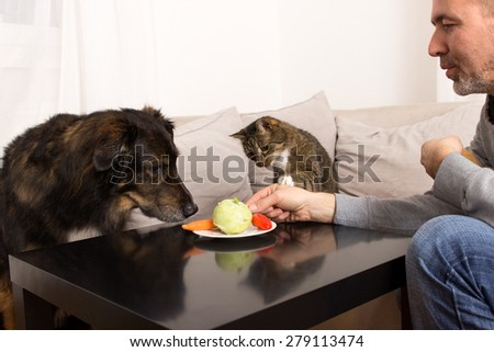 A dog and a cat sniffing curiously at plate with vegetables - stock photo