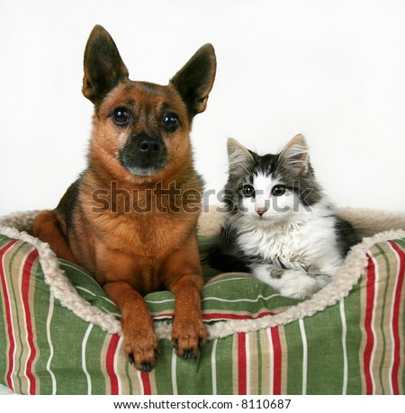 a dog and a kitten in a pet bed - stock photo