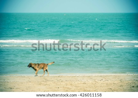 A dog at the beach, vintage tone - stock photo