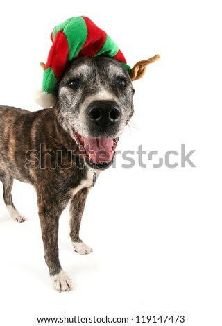 a dog dressed up for chistmas