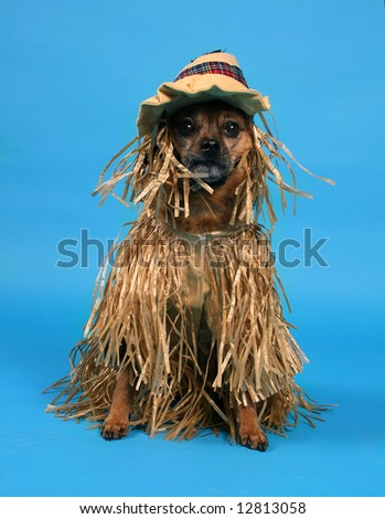 a dog dressed up in a scarecrow costume - stock photo