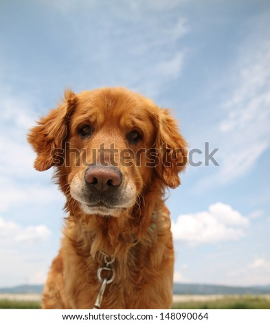 a dog enjoying the outdoors on a beautiful summer day - stock photo