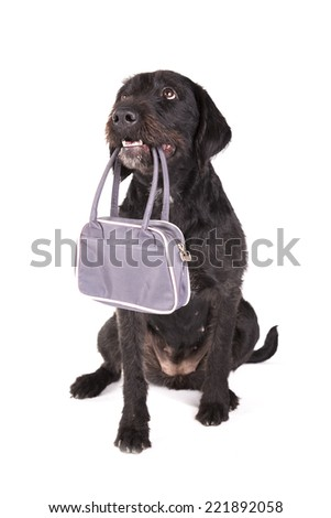 A dog holding a bag in its mouth on a white background