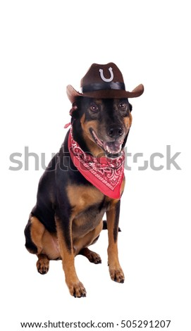 A dog in a cowboy hat and scarf sitting and looking forward. Isolated on white background.