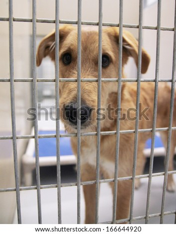 a dog in a local shelter (focus on the nose) - shot at high iso - stock photo