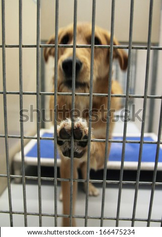 a dog in a local shelter (focus on the paw) shot at high ISO  - stock photo