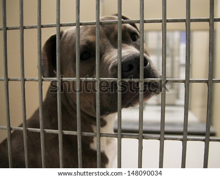 a dog in an animal shelter, waiting for a home - stock photo