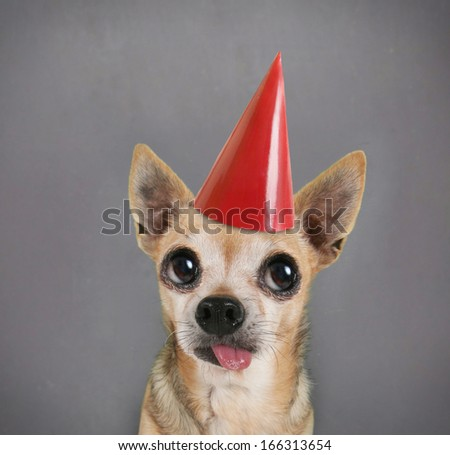 a dog in front of a blank chalkboard with a birthday hat on - stock photo