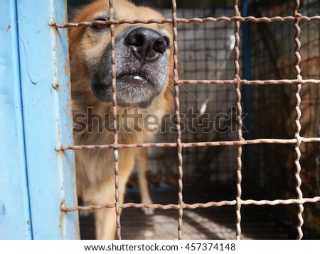 a dog in his blue cage.