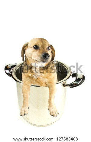 a dog in the pot