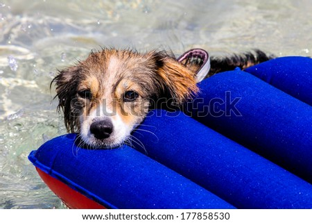 A dog is resting on an air mattress - stock photo