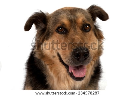 A dog isolated on a white background.