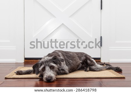 A dog laying down on a mat in front of a front door with a sad expression waiting for her owner to come home - stock photo