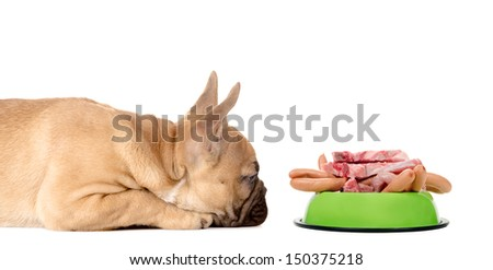 a dog lies before a feeding bowl full of meat and sausage - stock photo