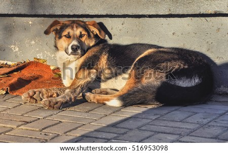A dog living on the street