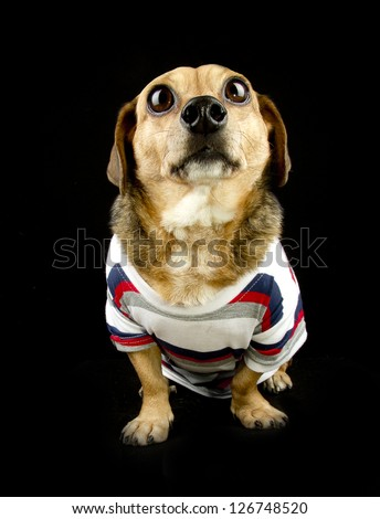a dog looking - stock photo