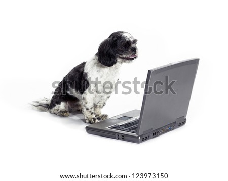 A dog looking at a laptop isolated on white. - stock photo