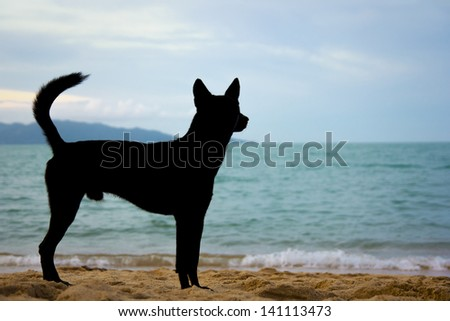 A dog looking by the ocean's edge