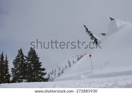 A Dog Looks at a Large Ski and Snowboard Jump in the Mt Baker Back Country in a Snow Filled Landscape