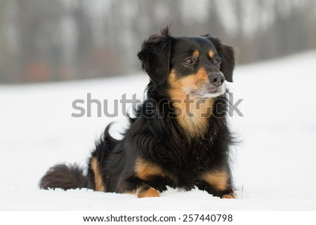A dog lying in the snow and looks to the side